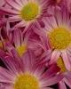 bloemen_190