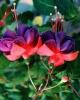 bloemen_191