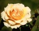 bloemen_194