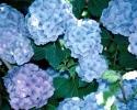 bloemen_195