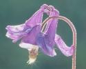 bloemen_198