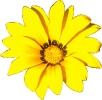 bloemen_1