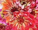 bloemen_200