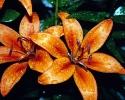 bloemen_203