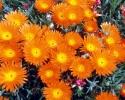 bloemen_204