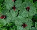 bloemen_205