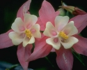 bloemen_206