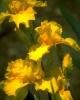 bloemen_208