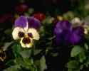 bloemen_209