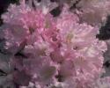 bloemen_211
