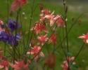 bloemen_212