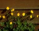bloemen_213