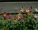 bloemen_216