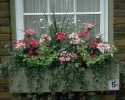bloemen_218
