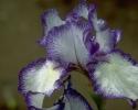 bloemen_220