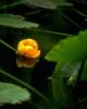 bloemen_223