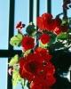 bloemen_225