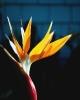 bloemen_226