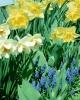 bloemen_227