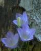 bloemen_230