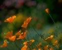 bloemen_231