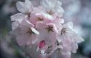 bloemen_240
