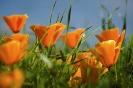 bloemen_245
