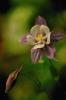 bloemen_248
