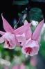 bloemen_249