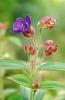 bloemen_250