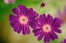 bloemen_251