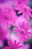 bloemen_255