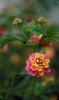 bloemen_256