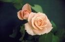 bloemen_257