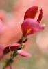 bloemen_259