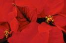 bloemen_260