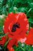 bloemen_261