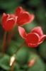 bloemen_263