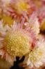 bloemen_264
