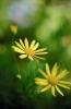 bloemen_266