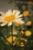 bloemen_268