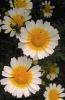 bloemen_269