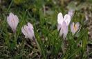 bloemen_270