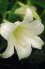 bloemen_272