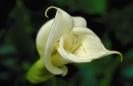 bloemen_273