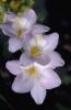 bloemen_274