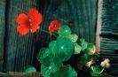bloemen_278