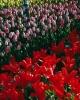 bloemen_284
