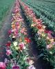 bloemen_285