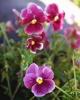 bloemen_288